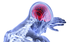 brain-3168269.png